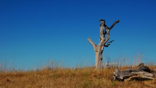 05-tree2
